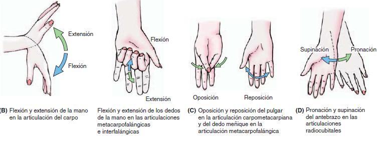 Movimientos de la mano |