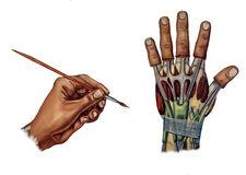 Pinzas precisión bloqueo del pulgar