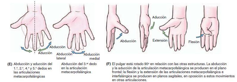 Movimientos de la mano