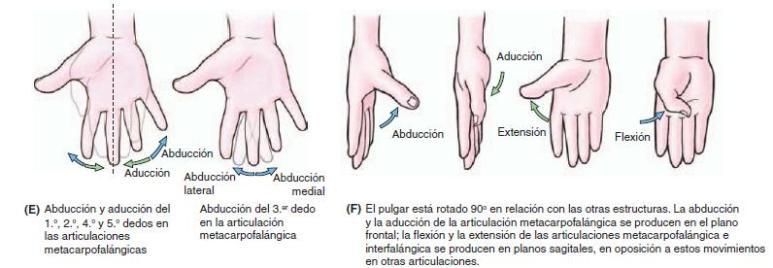 movimientos mano